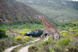 Safari Anyone? Africa Says it's Ready! The ultimate socially distanced vacation