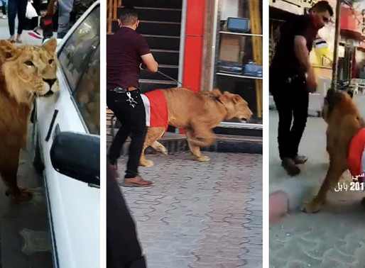 The Lion of Iraq joins protests to curb the brutality of police dogs used against protestors.