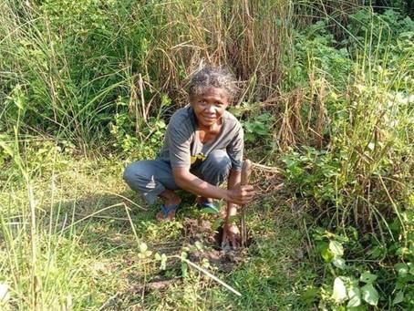 12,000 Newly Planted Cashews