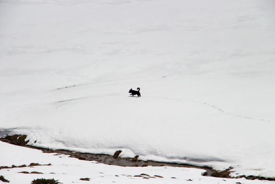 Dog, Yak Kharka