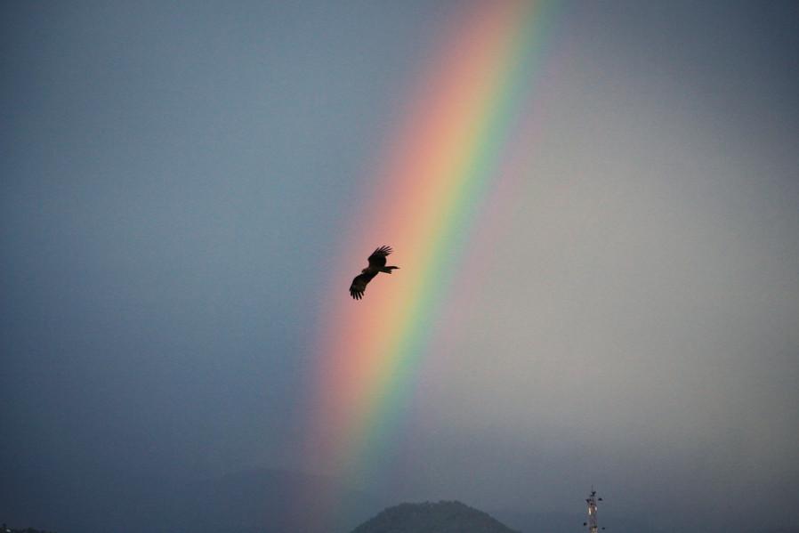Eagle, Pokhara
