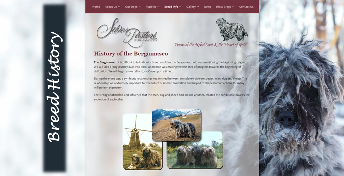 Silver Pastori Breed History