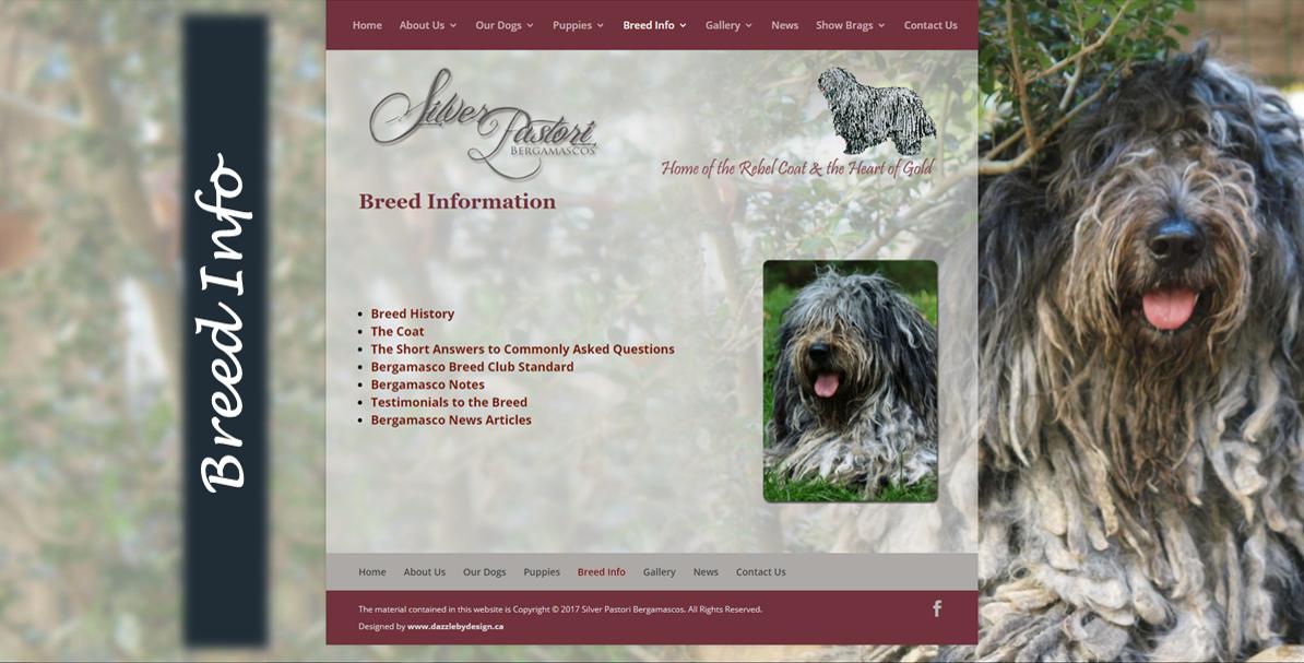 Silver Pastori Breed Info