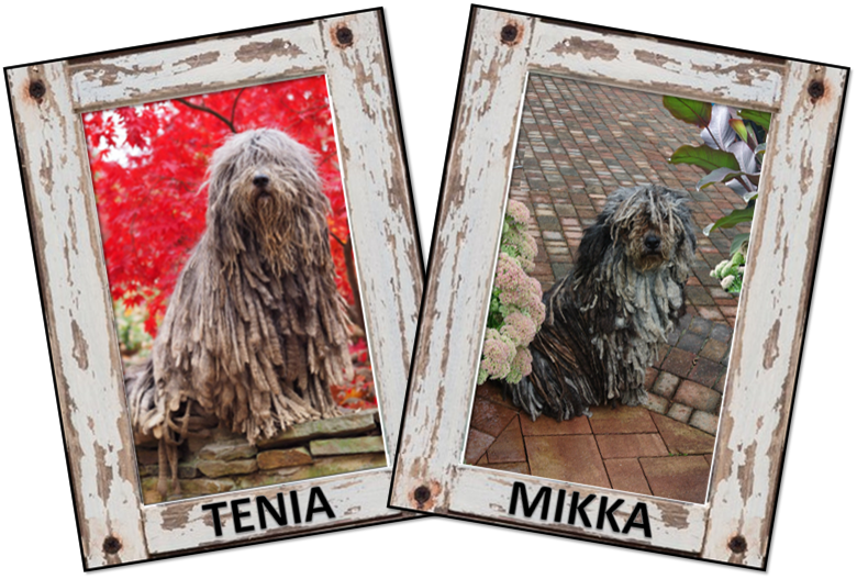 Tinia's and Mikka's puppies arrived September 16th.