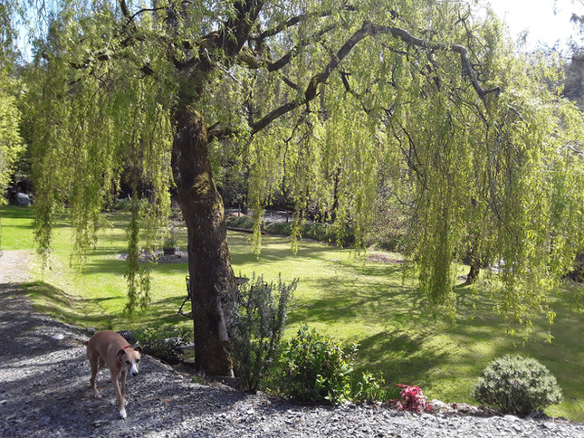 Willow Lodge Garden