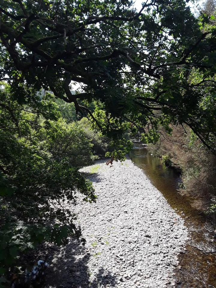 Dolau Afon River 2.png