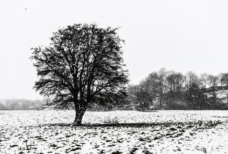 Snow falling on a tree.jpg
