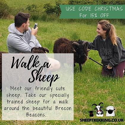 Jacob Sheep Trekking & Farm Experience Days
