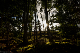 Sunset_through_trees_Elan_Valley_©.png