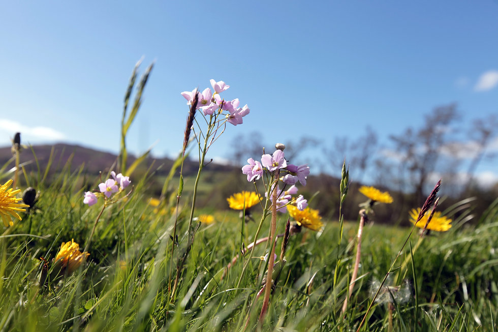 Powys, Spring53.jpg