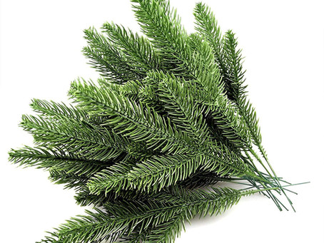 Pine Needle Tea: Potential Antidote for Transmission of Spike Protein