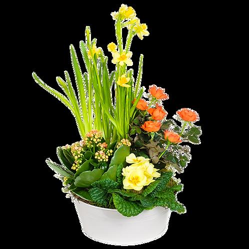 Coupe de plantes avec jonquilles