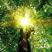 18456891-arbres-forêt-nature-fond-vert-l
