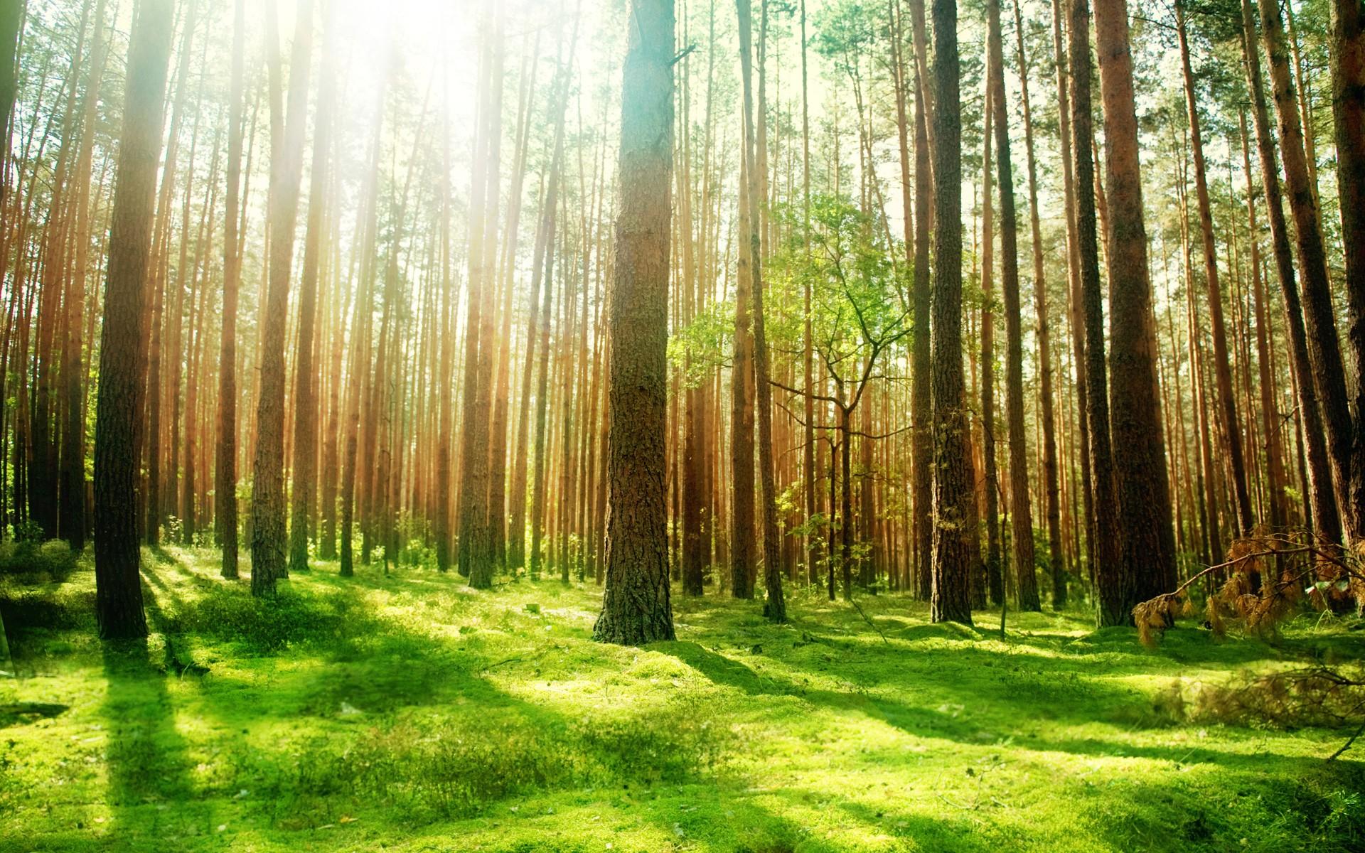 des Umweltschutzes