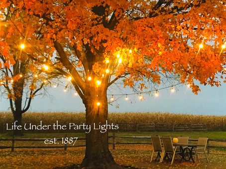 Life Under The Party Lights