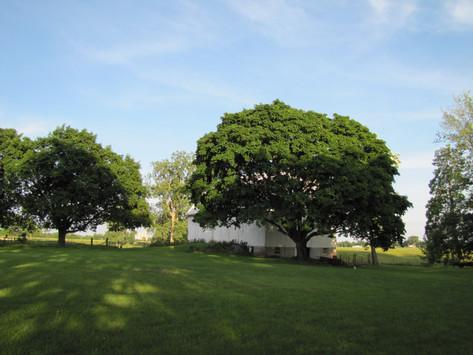 Parsons Countyline Farm