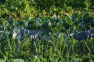 vegetables-3507843_1920-1440x960.jpg