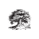 Sage Hill Logo 4_just the baobab.png