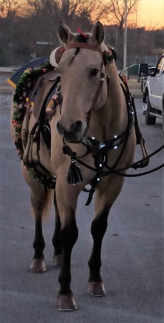 HORSE_Lakotah_search_rescue.jpg