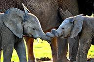 1_MPM_ELEPHANTS_IN_TANGLE-02.jpg