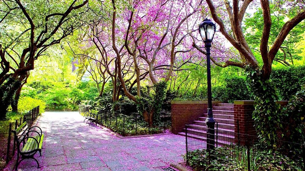 Matching Colors for Your Garden แต่งสวนให้เจิดจรัสด้วยสีสัน8.jpg