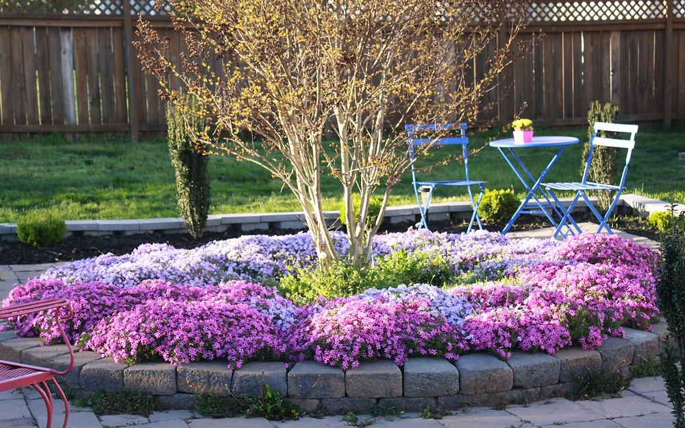 Matching Colors for Your Garden แต่งสวนให้เจิดจรัสด้วยสีสัน13.jpg