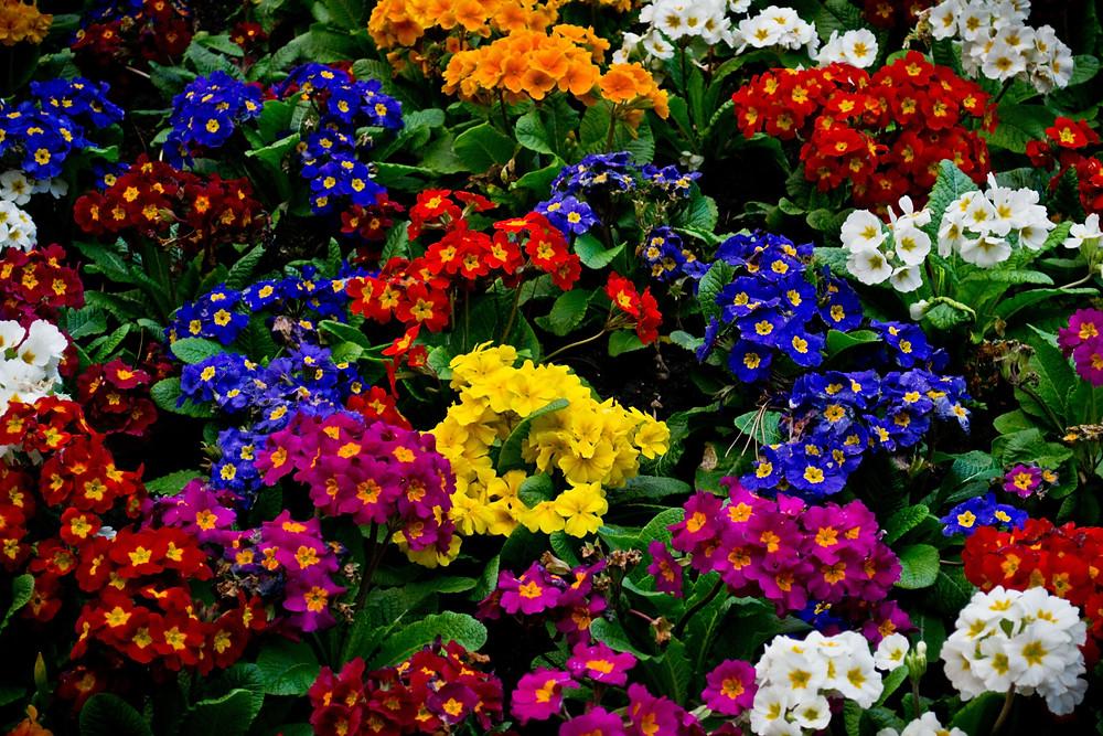 Matching Colors for Your Garden แต่งสวนให้เจิดจรัสด้วยสีสัน11.jpg