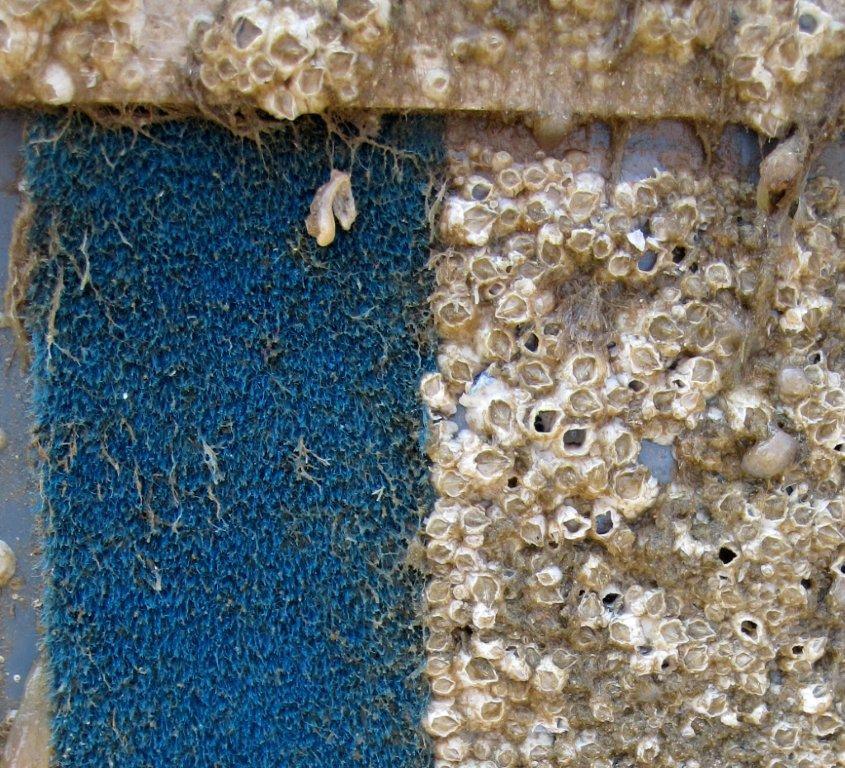 zeepokken-naast-thorn-d.jpg