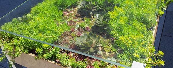 เติมสีเขียวให้บ้าน ด้วยสวนในโต๊ะสุดเก๋3.jpg