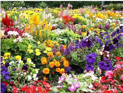 Matching Colors for Your Garden แต่งสวนให้เจิดจรัสด้วยสีสัน7.JPG