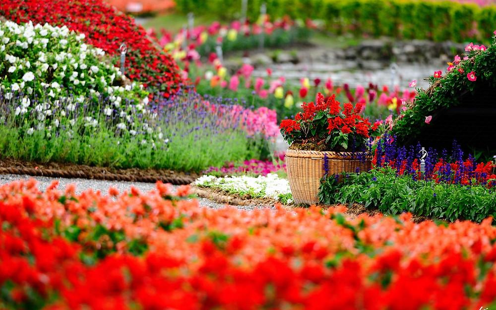 Matching Colors for Your Garden แต่งสวนให้เจิดจรัสด้วยสีสัน12.jpg