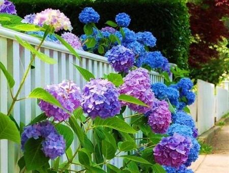 Matching Colors for Your Garden แต่งสวนให้เจิดจรัสด้วยสีสัน9.jpg
