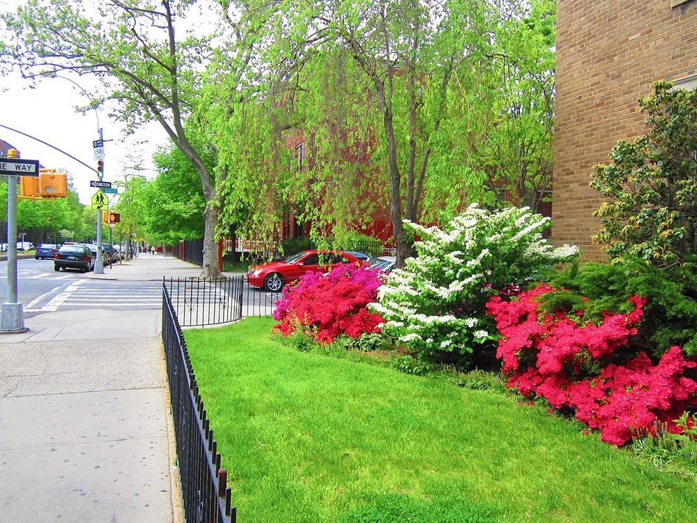 Matching Colors for Your Garden แต่งสวนให้เจิดจรัสด้วยสีสัน10.jpg