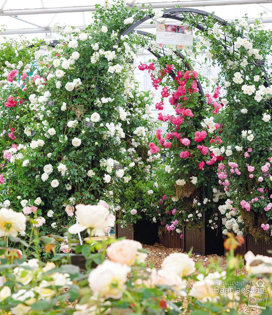Matching Colors for Your Garden แต่งสวนให้เจิดจรัสด้วยสีสัน6.jpg