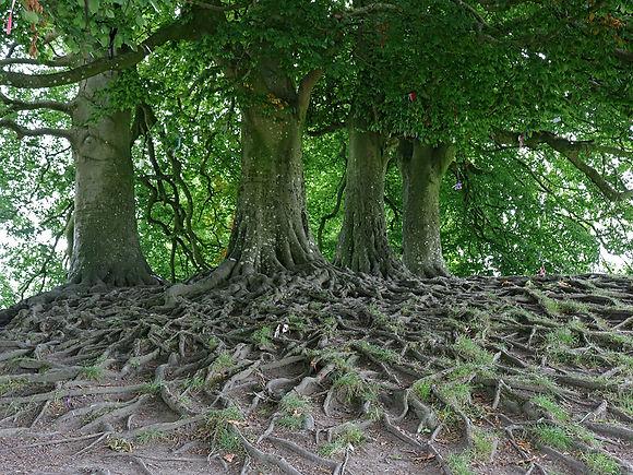 avebury-tree-roots.jpg