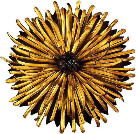 Chrysanthemum_edited.png