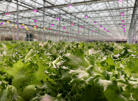 Where Your Food Comes From: Green City Growers
