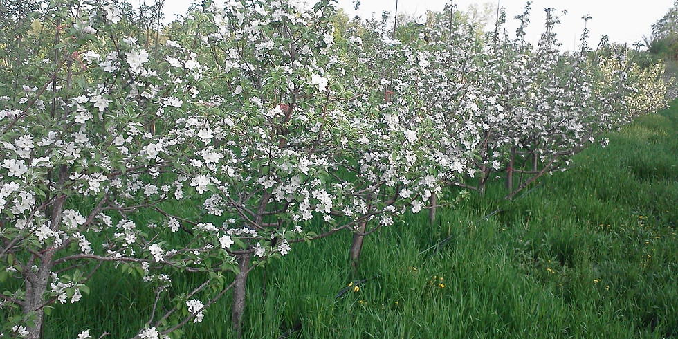 Growing Organic Apples & Pears Part-time and Low-cost