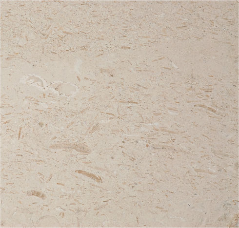 Fossile Limestone