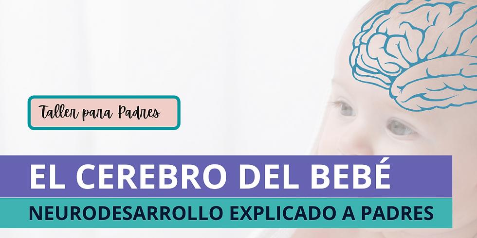 Neurocrecer - El Cerebro del Bebé