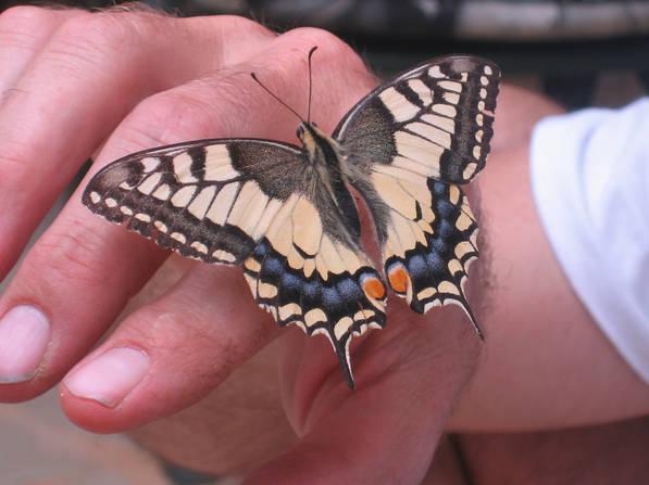 Vlinder.jpg