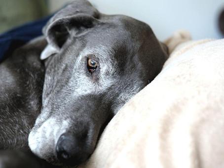 Estudios confirman que la muerte de una mascota suele ser más dolorosa que la de un humano🐶🕊️