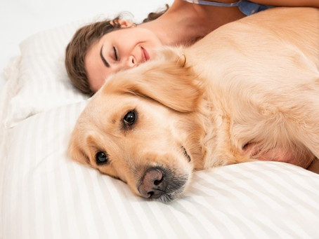 ¿Compartes cama con tu perrito? Eso podría traerte algunos beneficios, según estudio🐶💕