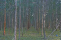 Reflorestamento.jpg