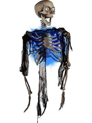 Lightup Half Skeleton