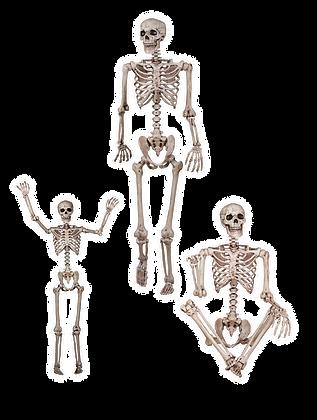Skeleton Lifesize