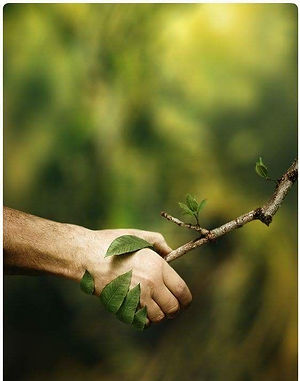 Remedies for Environmental Protection: Civil, Criminal & Constitutional
