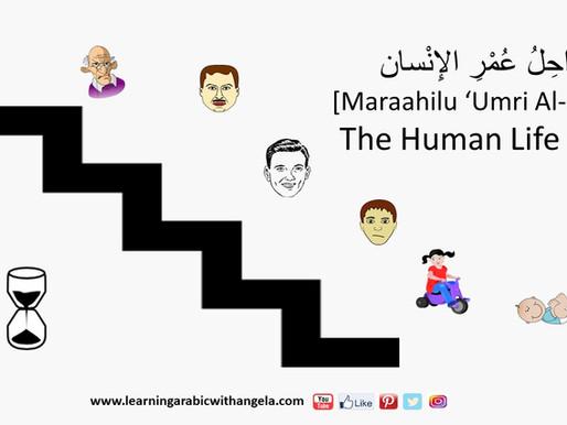 The Human Life Cycle in Arabic