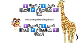 """Arabic Adjectives"" Vocabulary"