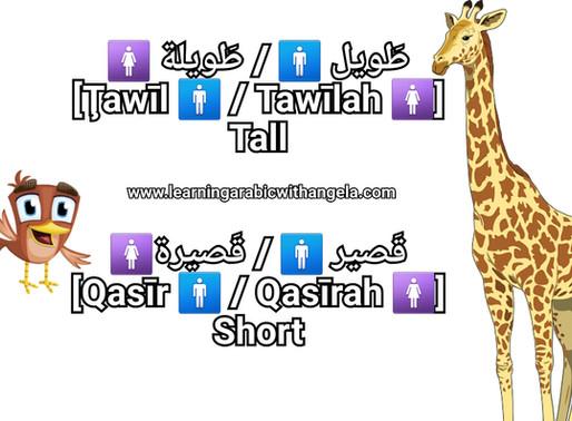 """Arabic Adjectives"" Vocabulary"